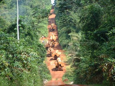 Une forêt en afrique. Photo d'archives.