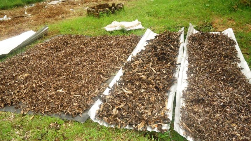 La phase de séchage des déchets ménagers au soleil. Crédit Photo Mathias Mouendé Ngamo