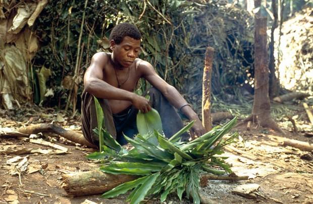 Feuilles d'Aframomum mises à brûler pour empêcher la pluie avant une expédition de chasse à Baka, à l'est du Cameroun